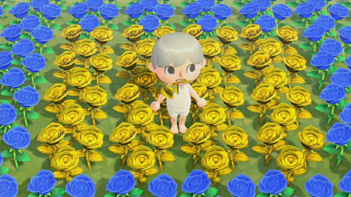 どうぶつの森 青いバラ