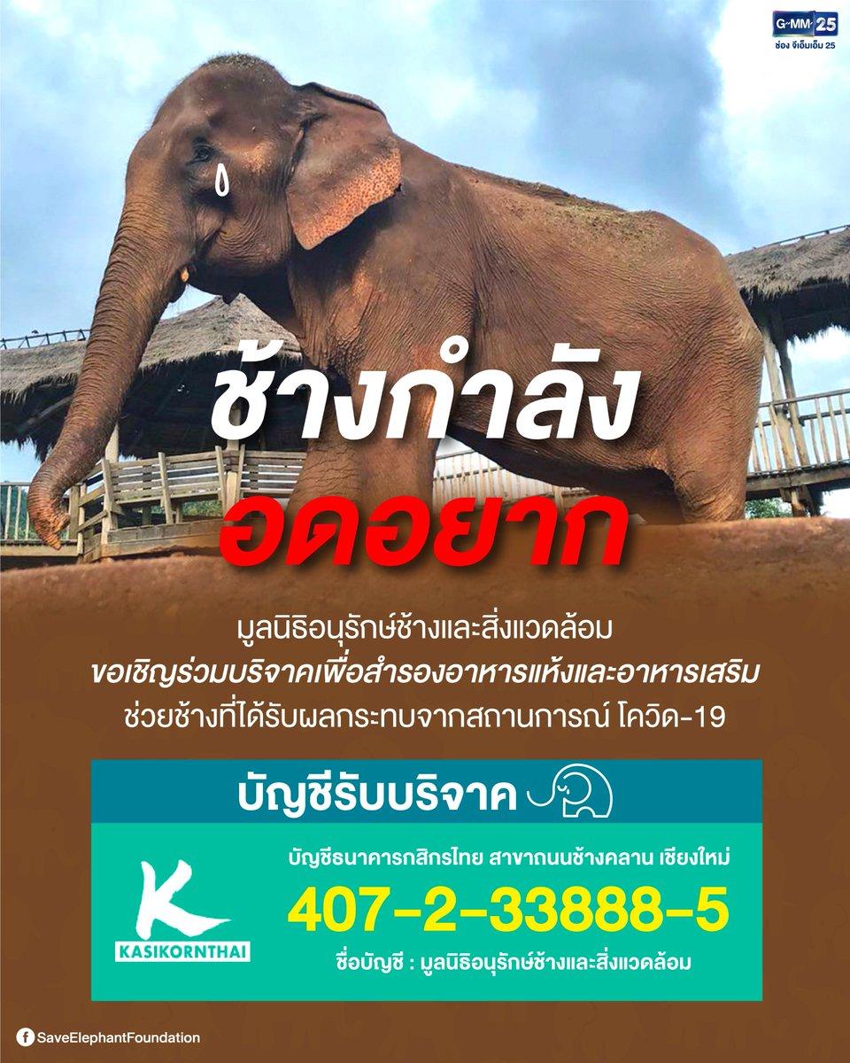 น้องช้างกำลังอดอยาก ! เนื่องจากสถานการณ์โควิด-19 ที่แพร่ระบาดไปทั่วโลกในขณะนี้ ช้างเหล่านี้ กำลังจะอดอยาก รวมไปถึงบุคคลากรในการเลี้ยงดู และอาหารที่สั่งมาสำรองไว้ให้กับช้าง ก็มีเพียงพอแค่ 1 เดือนเท่านั้น  ...  #GMM25 #ช้างกำลังอดอยาก #SaveElephantFoundation pic.twitter.com/Z7fUClDOTK