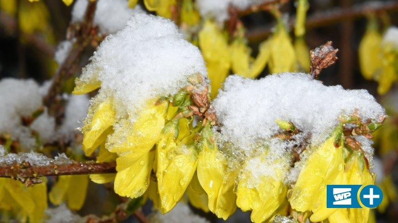 Wetter: Sogar Schnee ist plötzlich wieder im Hochsauerland möglich: Es weht ein Hauch von Frühling im Hochsauerland - doch das Wetter ändert sich schon bald. Selbst Schnee ist plötzlich wieder möglich. https://www.wp.de/staedte/meschede-und-umland/sogar-schnee-ist-ploetzlich-wieder-im-hochsauerland-moeglich-id228770999.html?utm_source=dlvr.it&utm_medium=twitter… (bot)pic.twitter.com/DQmVh1BOyY