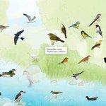 Image for the Tweet beginning: Voleu escoltar els ocells des