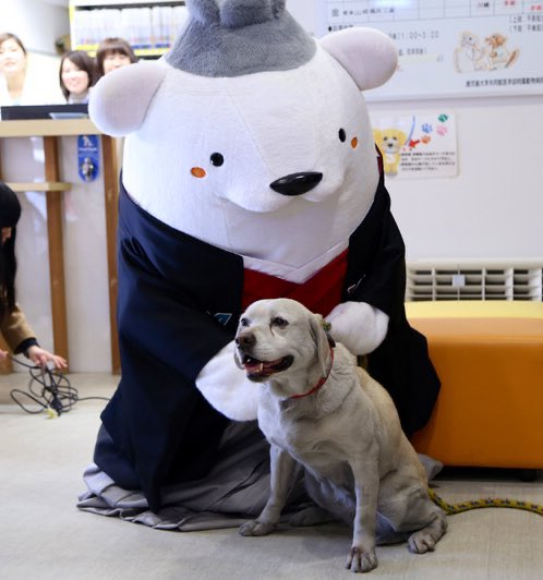 Kagoshima University's mascot, Sattsun, is a polar bear in traditional dress. Here he is with a dog and some goats.