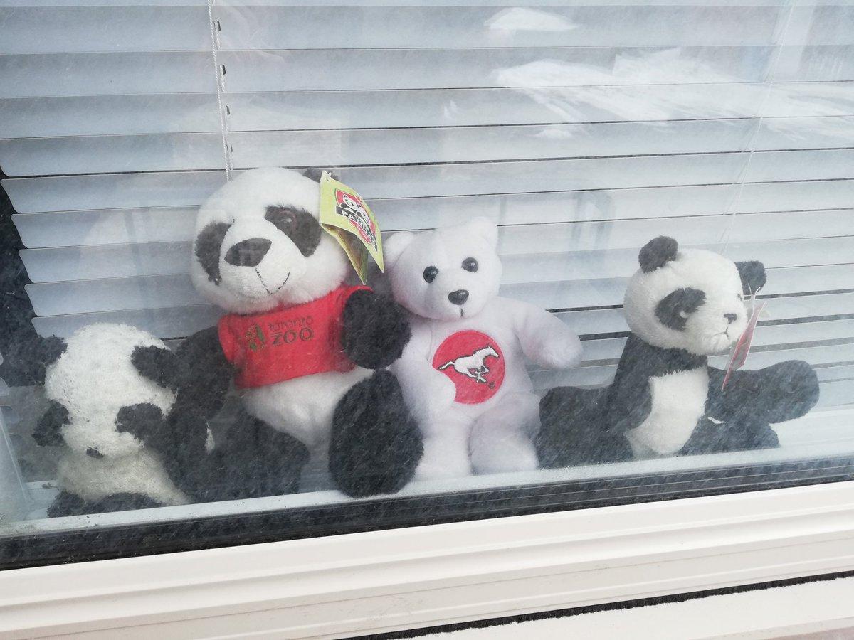First Ward community sets up bear hunt for kids