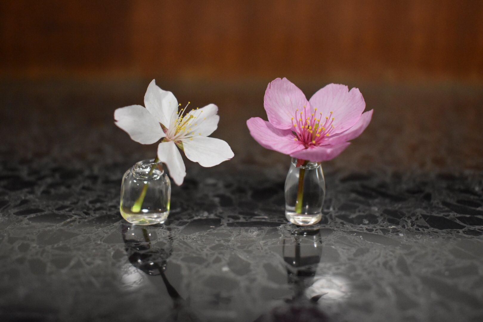 これすごくて!平野神社の桜のところで出会ってしまった小さい一輪挿し!吹きガラスらしいんだけど、花小さくても茎短くてもいけられるしお花がそこにあるみたいに見えるの可愛い!あと表面張力で水がこぼれない!お店の方がやってらした逆さまにお花いけるのめっちゃ素敵…こぼれないからできるの