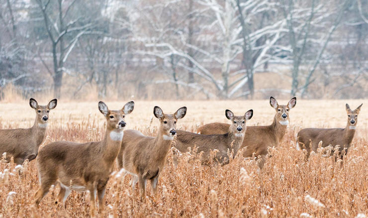 Can You Have Too Many Deer?: realtree.me/2WGbhuo If so, should you target lower deer densities?