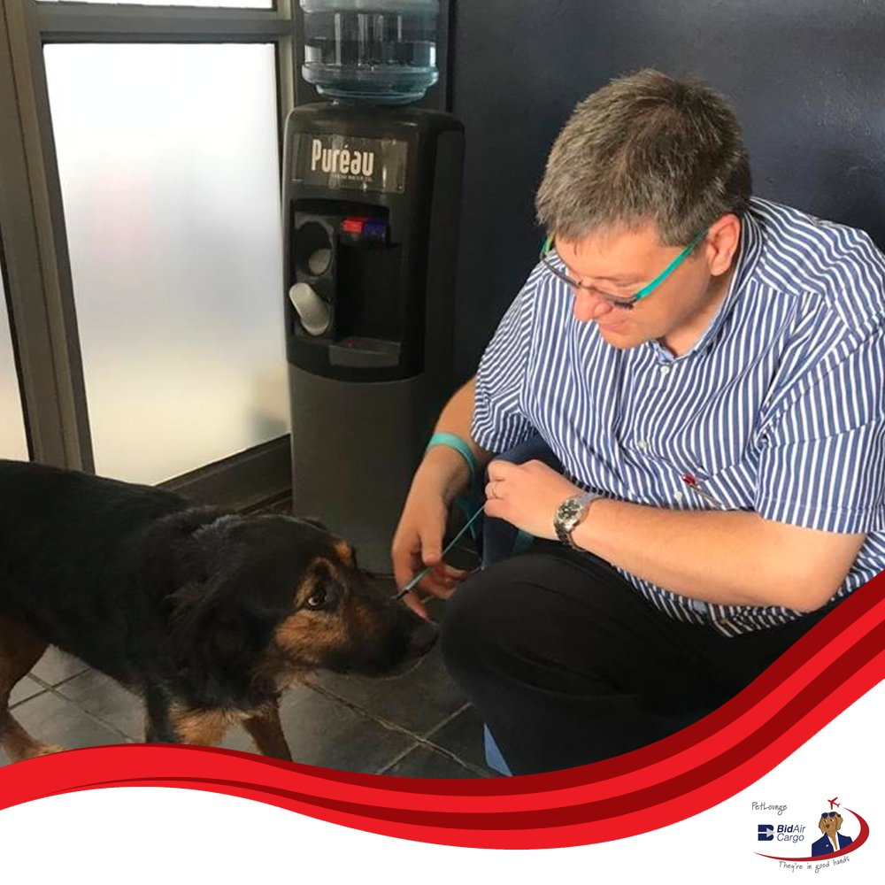 This beautiful rescue pup named Jamie, flew from Cape Town to Johannesburg yesterday to meet her new dad. #PetLounge #AnimalTravel #instapaws #petlovers #loveforpets #animaltransportation #animals #petsofinstagram #pets https://t.co/OXZ7Ee2ZsP