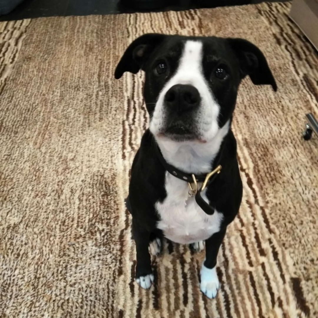 Kurtis wishes you a happy weekend! #mixedbreed #maythepawsbewithyou #lukedogwalker #dogwalkeruws #happydog #uws #doggy #doggo #furbaby #dogcity  #puppy #puppylover #ilovedogs #sweet #whatabeauty #nycitydog #sweetdoggo #endoftheday #cutedog #cutepic #dogsofinstagram