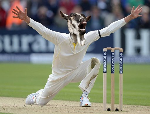 @CMRLee I reckon if you're bowling those sorts of off breaks you need a bit more spin otherwise your cat is going to prove a clawful. It's time you consulted a GOAT called Garry to help you out.