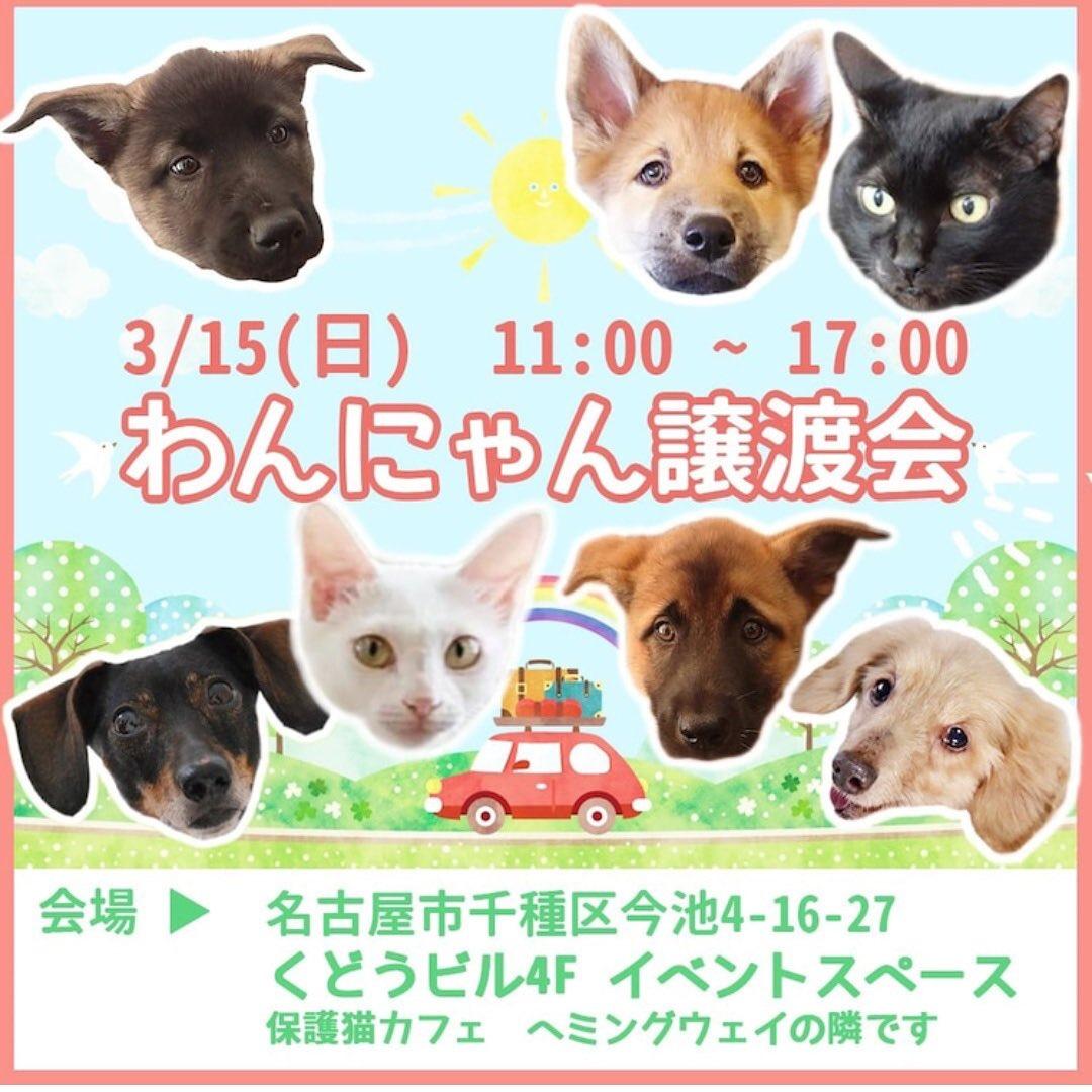 名古屋 カフェ 保護 犬