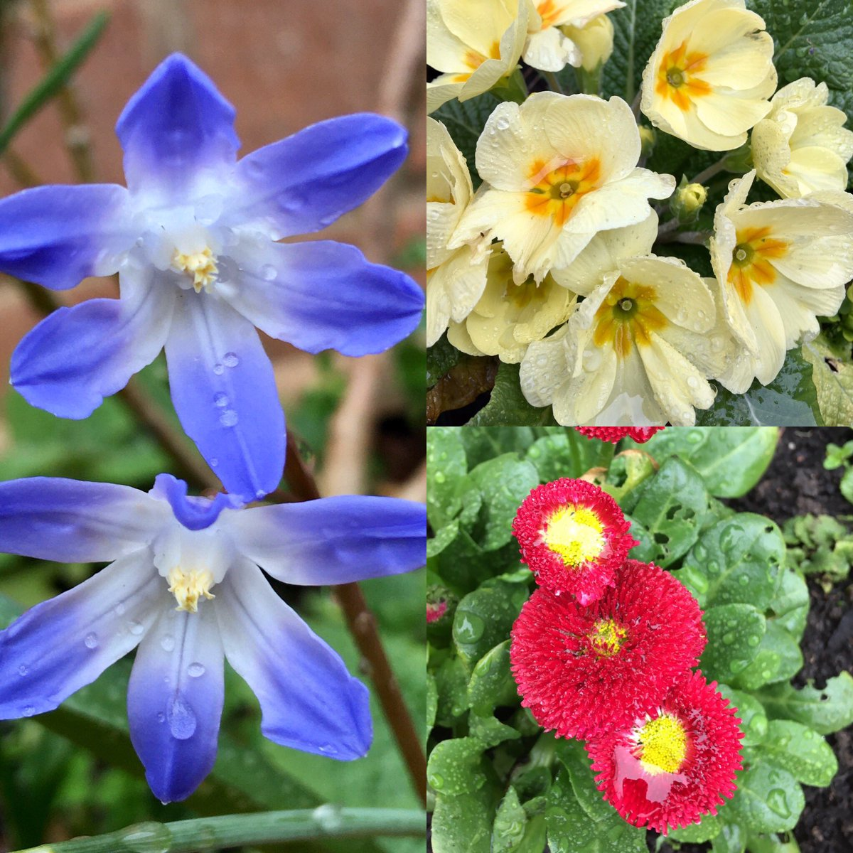 A slightly soggy #sixonsaturday from our garden 🌺🌼 hope you all have a lovely weekend 😀