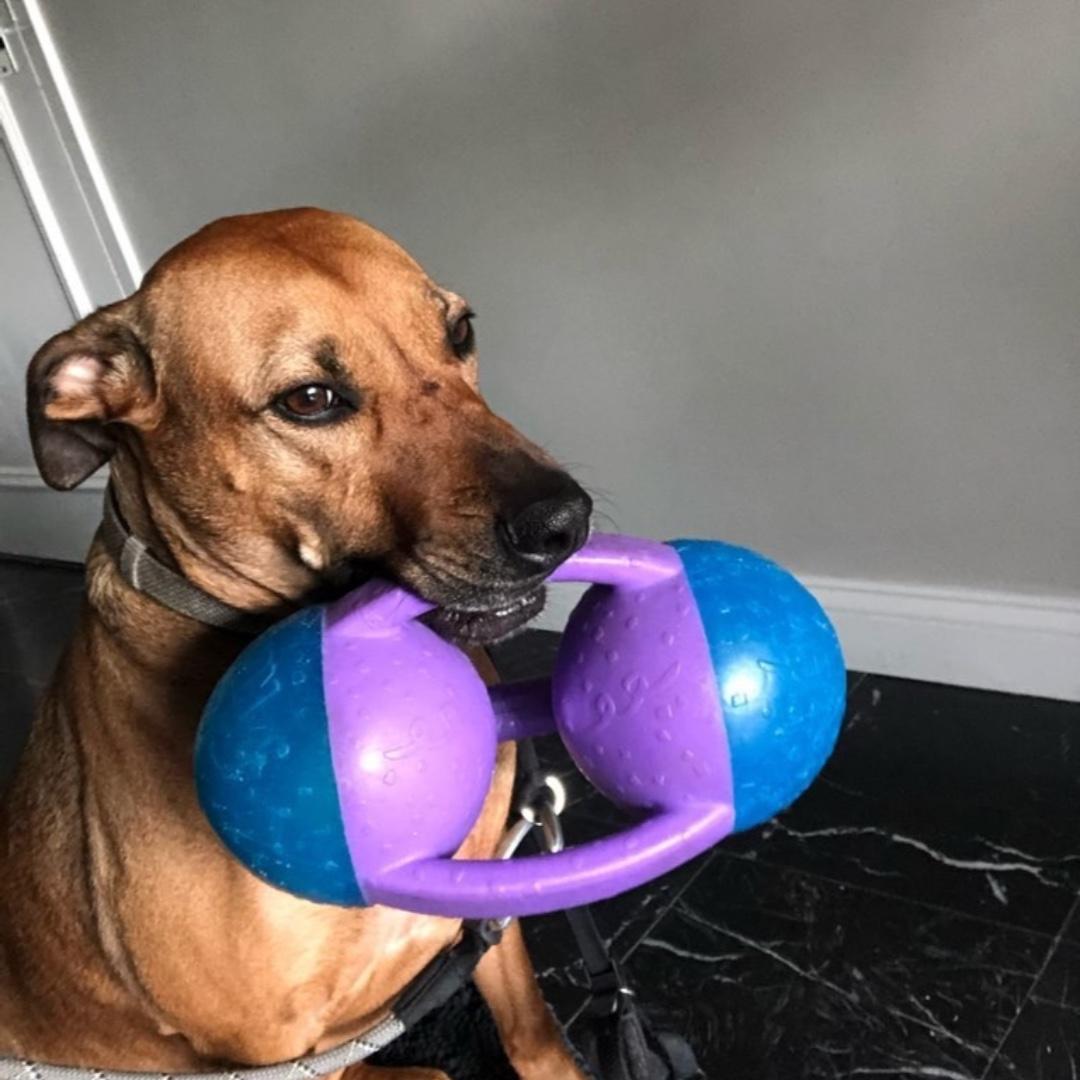 Simone wishes you a happy end of the day! #houndmix #maythepawsbewithyou #lukedogwalker #dogwalkeruws #happydog #uws #doggy #doggo #furbaby #dogcity  #puppy #puppylover #ilovedogs #sweet #whatabeauty #nycitydog #sweetdoggo #endoftheday #cutedog #cutepic #dogsofinstagram