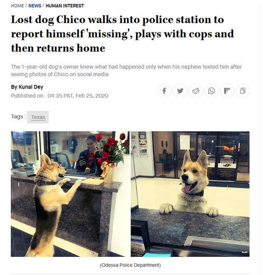 飼い犬が脱走した結果?自分で警察署に出頭したwww