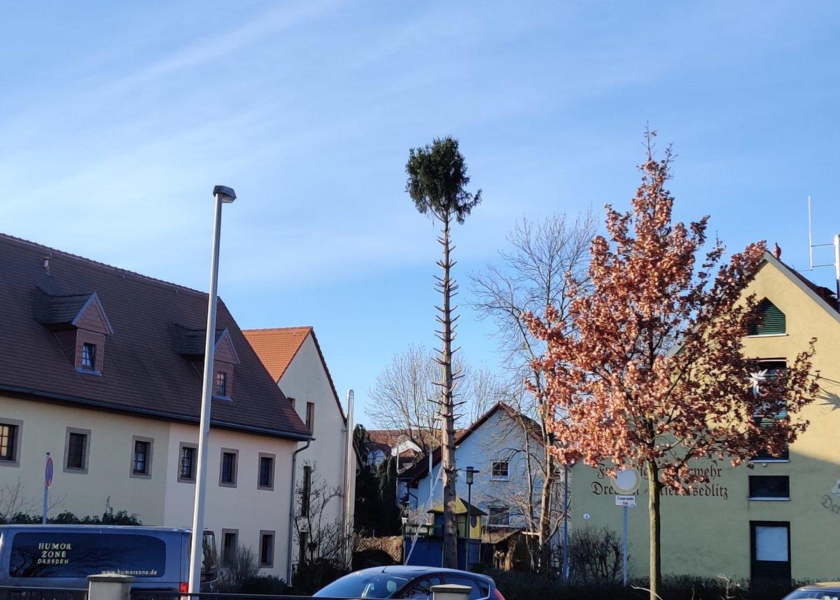 Karl-Heinz, der Baum müsste mal verschnitten werden. - okay, Sabine. So richtig? #Baumpflege ist so wichtig!