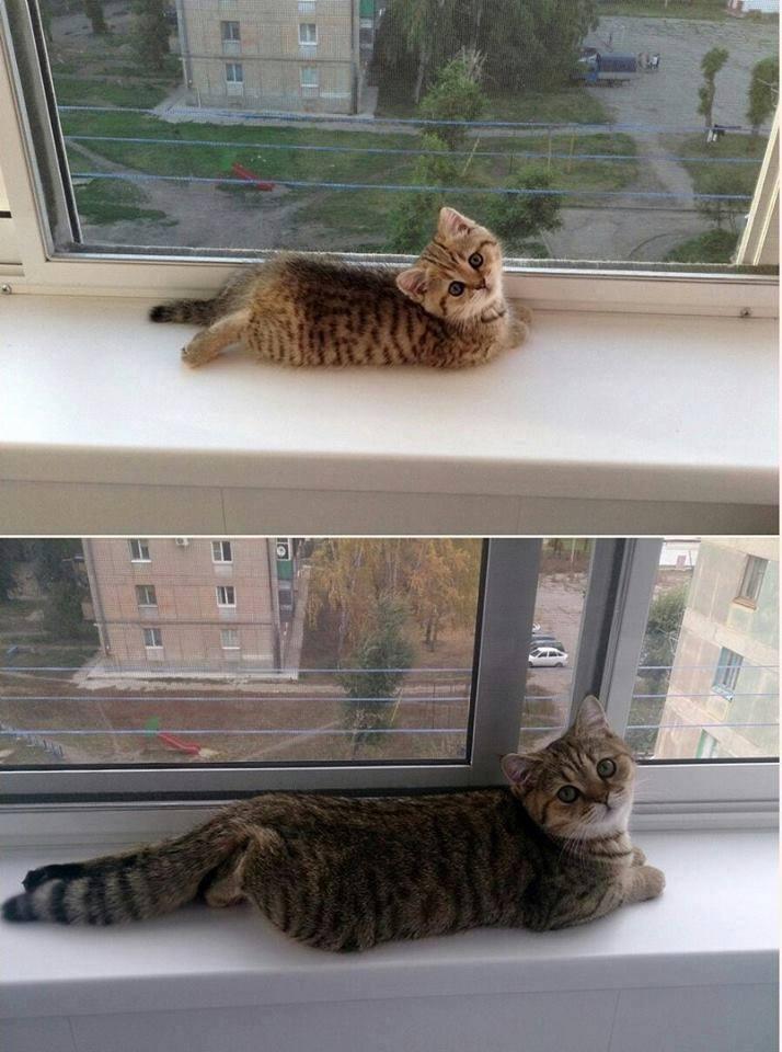 大きくなってもここが好き!成長しても同じ場所でくつろぐ猫に癒される!