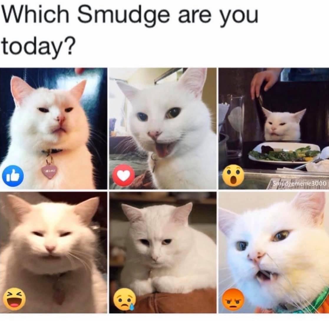 The Feline Philosopher On Twitter On A Scale Of Smudgethecat How You Doing Today We Re A Solid Soulfulsunday Lazysunday Cats