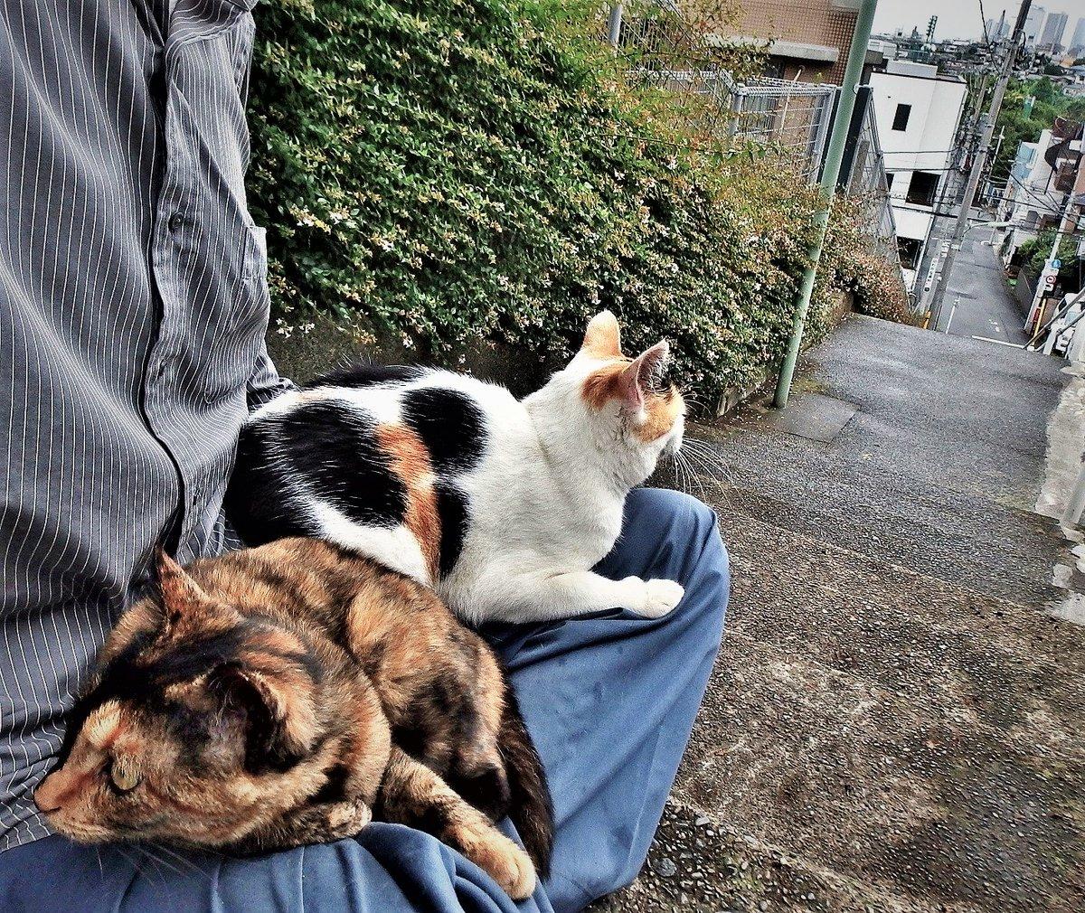 おはよ~ ございます ★╦╦╔╗╔╗╔╗╗╔░╔╦╗╔╗╔╗─╦╔╗╗╔★  ★╠╣╠╣╠╝╠╝╚╣░║║║║║║║╔╣╠╣╚╣★ ★╩╩╩╩╩─╩─╚╝░╝╝╝╚╝╩║╚╝╩║═╝★ 2016年6月のシロミケ1号とデビルです。 #cat #ねこ #猫 #地域猫 #東京探検隊 pic.twitter.com/icRBxw55t4