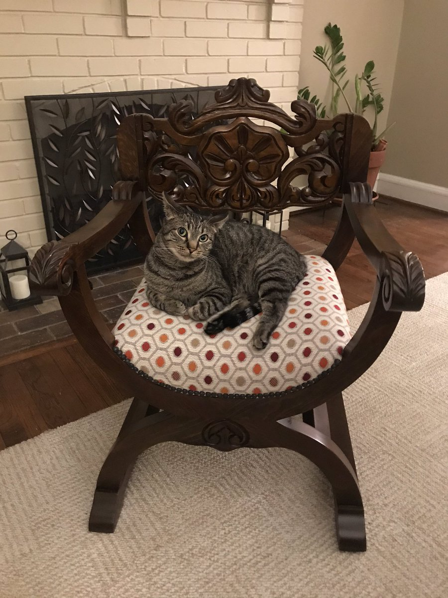 @SUEtheTrex Testing out the newly refinished chair, which is now called Big Gus' Chair! 🐱❤️🐱