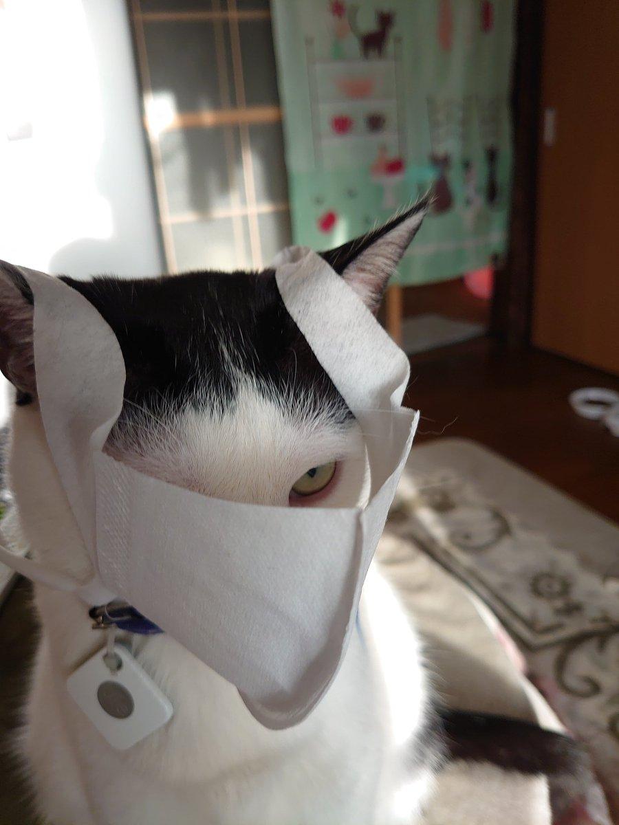 臭い マスク 口