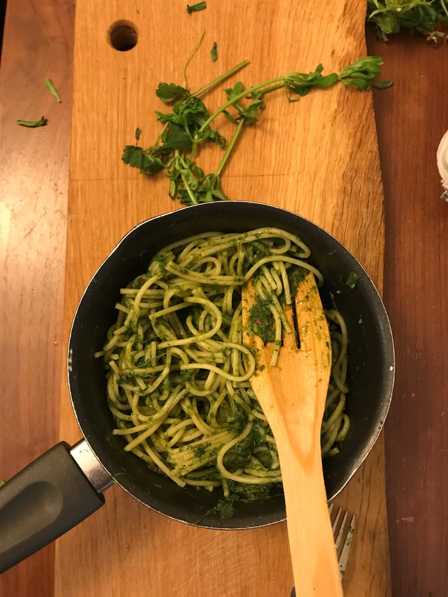 Sticky weed (cleavers) pesto for dinner.