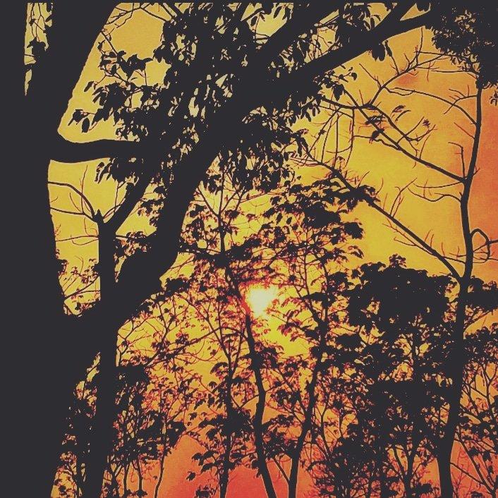 WILDLIFE SUNSET NIGHT LIGHT