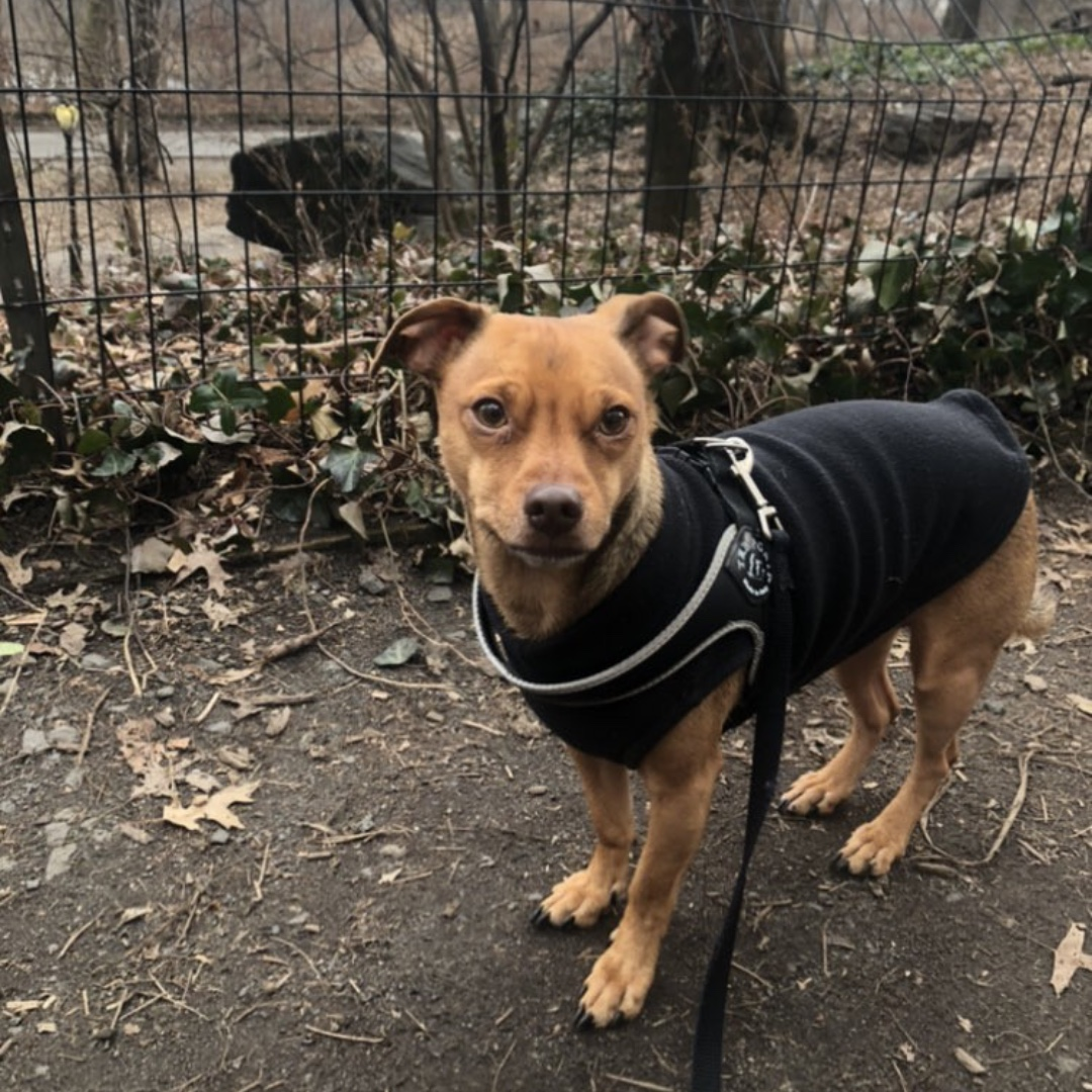 Louie wishes you a happy end of the day! #maythepawsbewithyou #lukedogwalker #dogwalkeruws #happydog #uws #doggy #doggo #furbaby #dogcity  #puppy #puppylover #ilovedogs #sweet #whatabeauty #nycitydog #sweetdoggo #endoftheday #cutedog #cutepic #dogsofinstagram