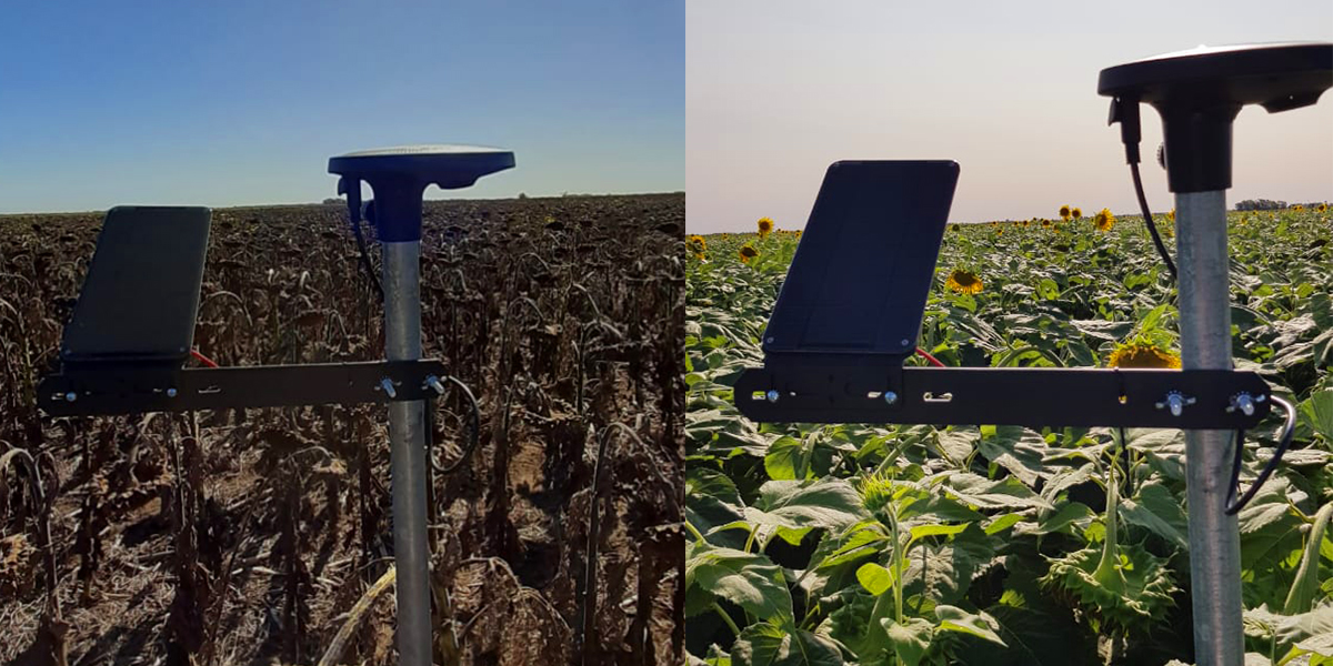 Would you like to see some @IndigoAg_Ar-grown sunflowers down in Argentina? 🌻