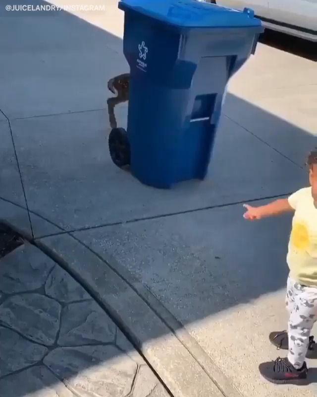 This video of Jarvis Landry's daughter meeting a fawn is still great 🙌 (via @God_Son80)