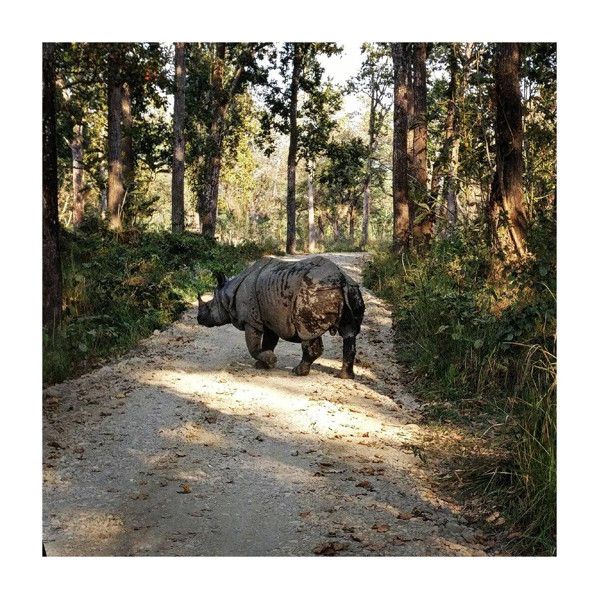 CHITWAN NATIONAL PARK #chitwannationalpark pic.twitter.com/KkMkJO2kyk