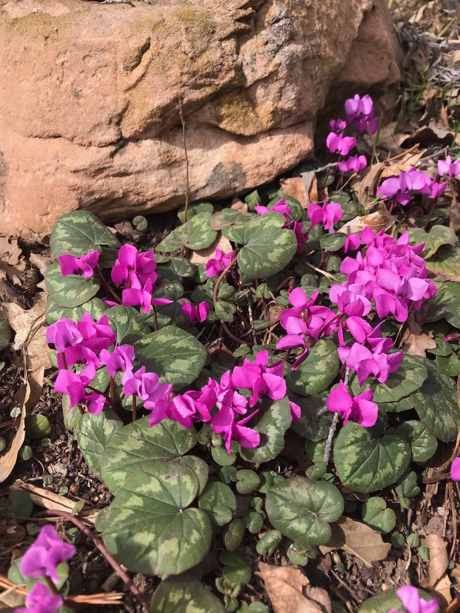 Red Butte Garden On Twitter Happy St Patrick S Day We Don T