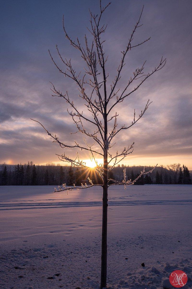 Take your mind off Coronavirus 1.. #yeg #alberta #winter #landscapephotography #rivervalley #exploring #sunrise #takeyourmindoffcoronavirus #exploring #outdoors #parks #winterinthecity pic.twitter.com/pjNAQWweKW