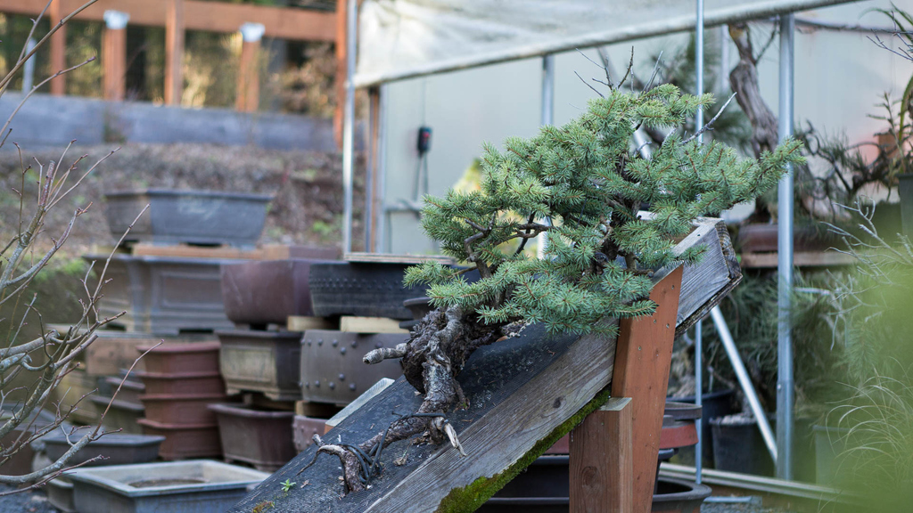 This week, Mirai Live is open to the public via YouTube and Facebook. We pose the question: what happens when we engage materials we don't typically see paired with bonsai? Build your skills in design, slab planting, and root work. Tonight, 6pm PDT, live.bonsaimirai.com