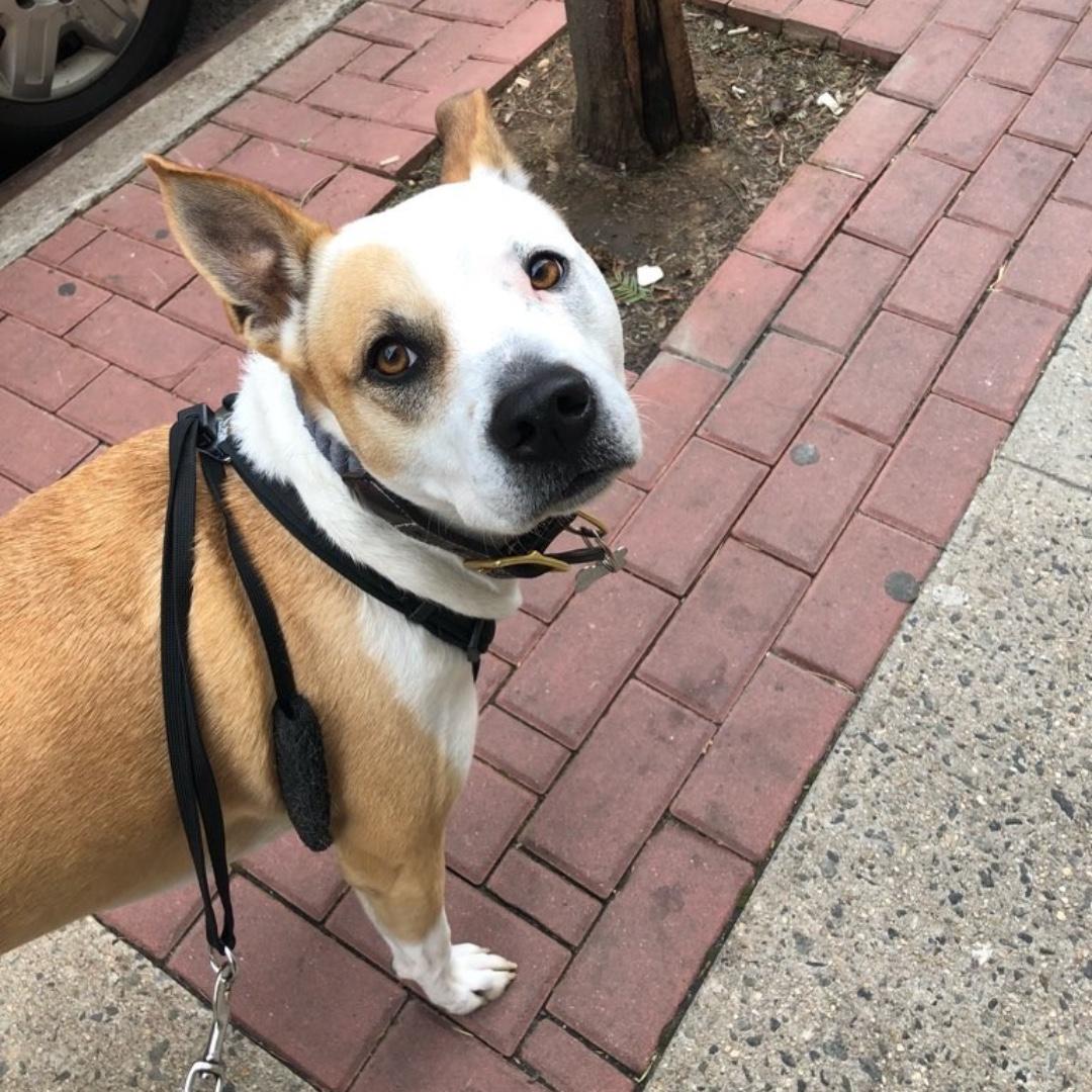 Bowie wishes you a happy end of the day! #maythepawsbewithyou #lukedogwalker #dogwalkeruws #happydog #uws #doggy #doggo #furbaby #dogcity  #puppy #puppylover #ilovedogs #sweet #whatabeauty #nycitydog #sweetdoggo #endoftheday #cutedog #cutepic #dogsofinstagram