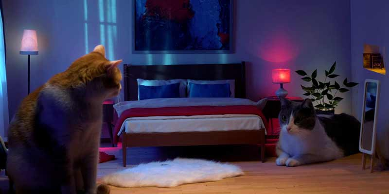 Durex Türkiye kediler için devrede https://t.co/3DLsmkjq15 https://t.co/vZHzLjFVQO