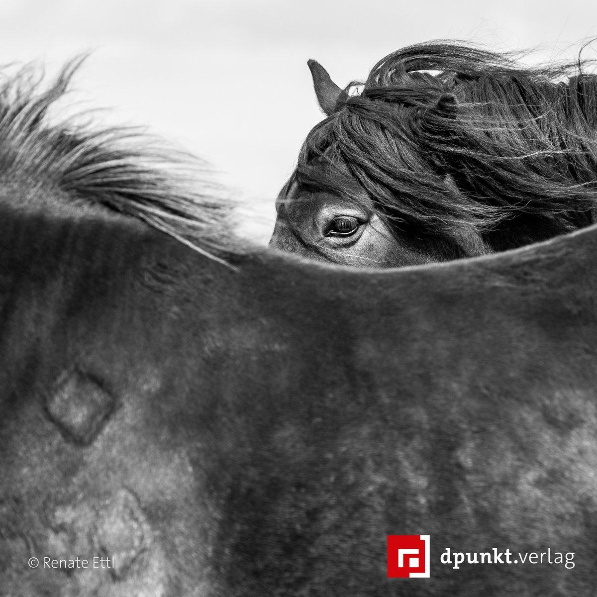 Ein Foto, das Gefühle vermittelt: Der sinnliche, in sich ruhende Blick des Ponys, getragen vom Rücken seines befreundeten Artgenossen im Vordergrund. Die vom Wind zerzauste Mähne bringt Bewegung ins Bild. Mehr dazu in »Kreative Pferdefotografie«. #tierfotografie #lesetipppic.twitter.com/kfCMXDWlpv
