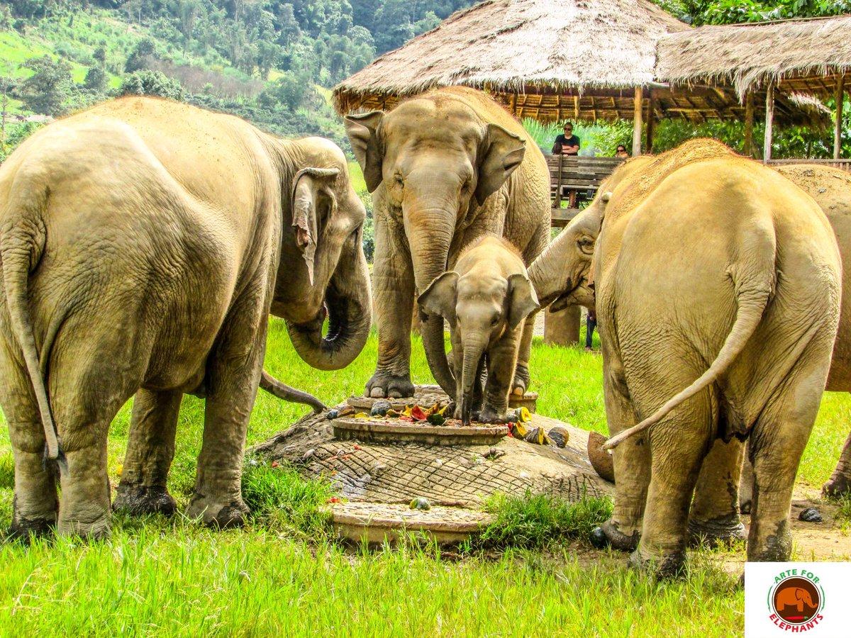 #wildlifephotography #WildlifeWednesday #elephants #ElephantNaturePark pic.twitter.com/XQc4RAGGo0