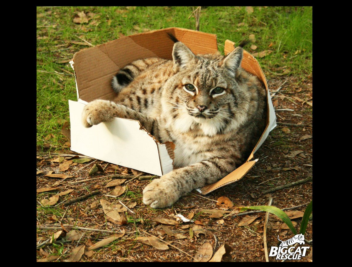 @AnneWHilborn > 'slinks off into bushes' BAD SPOTTY KITTY! You go to yer box RIGHT NOW!