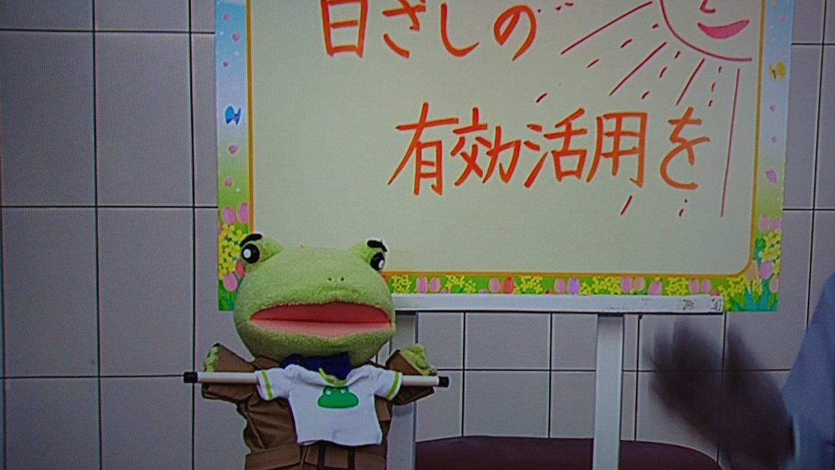カエル 出かける 天気 天気