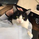 「在宅勤務は休日では無い」/猫に理解させるのは不可能!