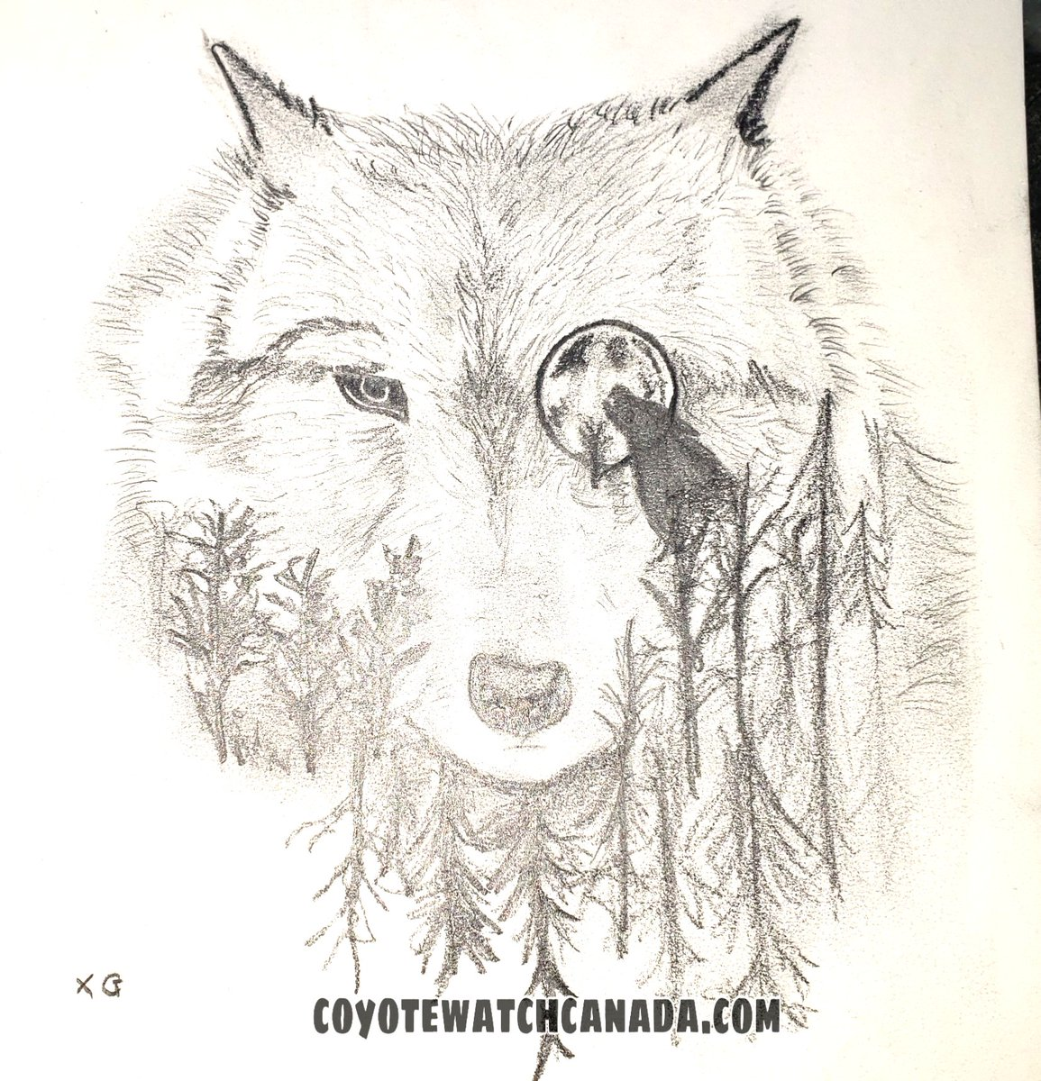 ~Wild Wednesday~ 'My Coyote Wolf Kin' -Artist Liliana G. age 14, pencil sketch- (CWC Canid Response Team Youth Volunteer)  See Coyote Watch Canada's message to our universal community  https://www.facebook.com/190725894273521/posts/3153592141320200/ …  #natureliteracy #shareyourcreativity #art #fauna #StaySafeStayHomepic.twitter.com/hr2J6UpxPP