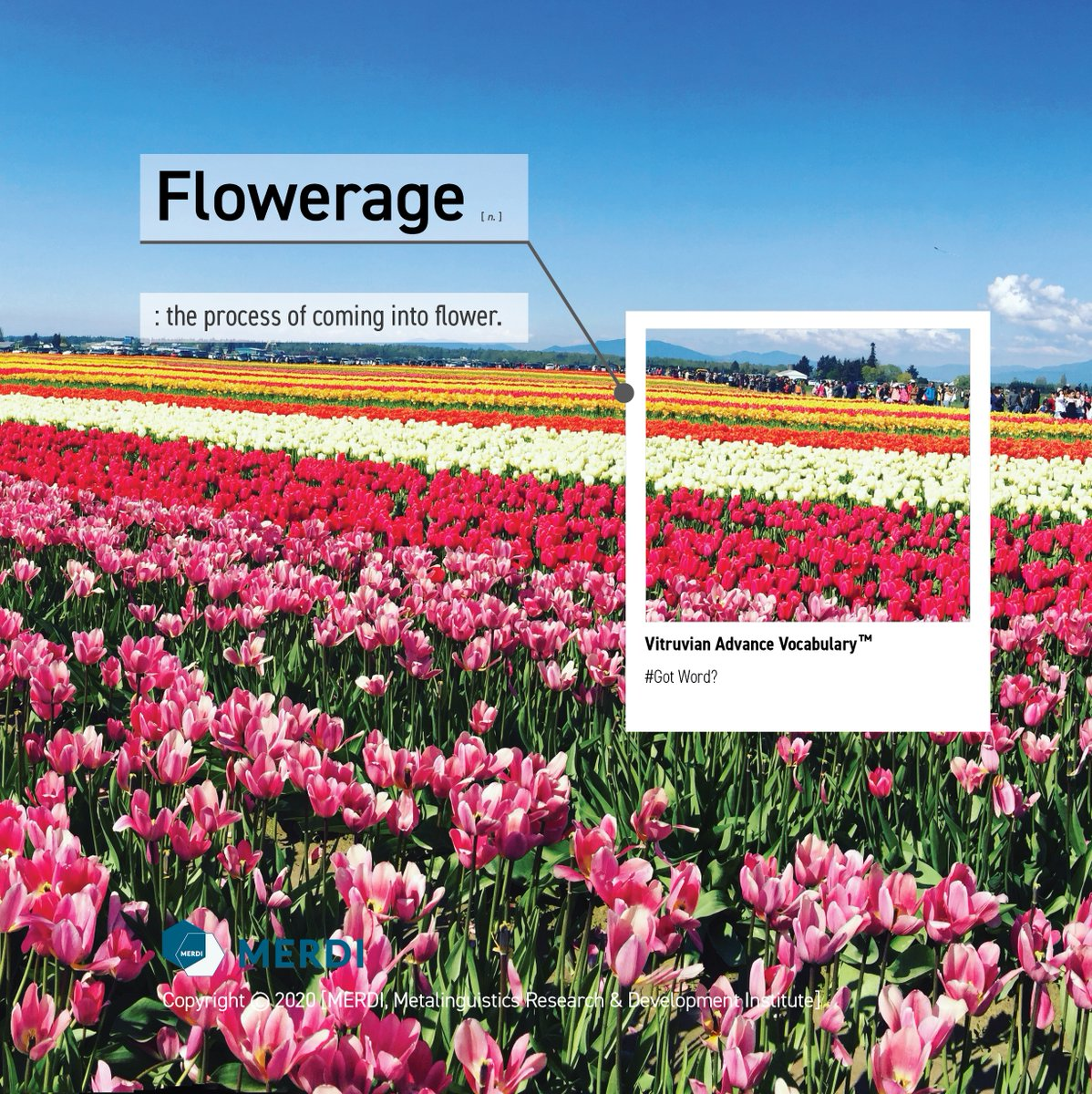 Flowerage [n.] : the process of coming into flower. Vitruvian Advance Vocabulary is based on innovative relational matrix and visualized vocabulary learning.  #Englishteacher #English #EnglishVocabulary #Vocabulary #Englishwords #ACT #SATprep #writingmotivation #englishwriting pic.twitter.com/p4pT9eotp4