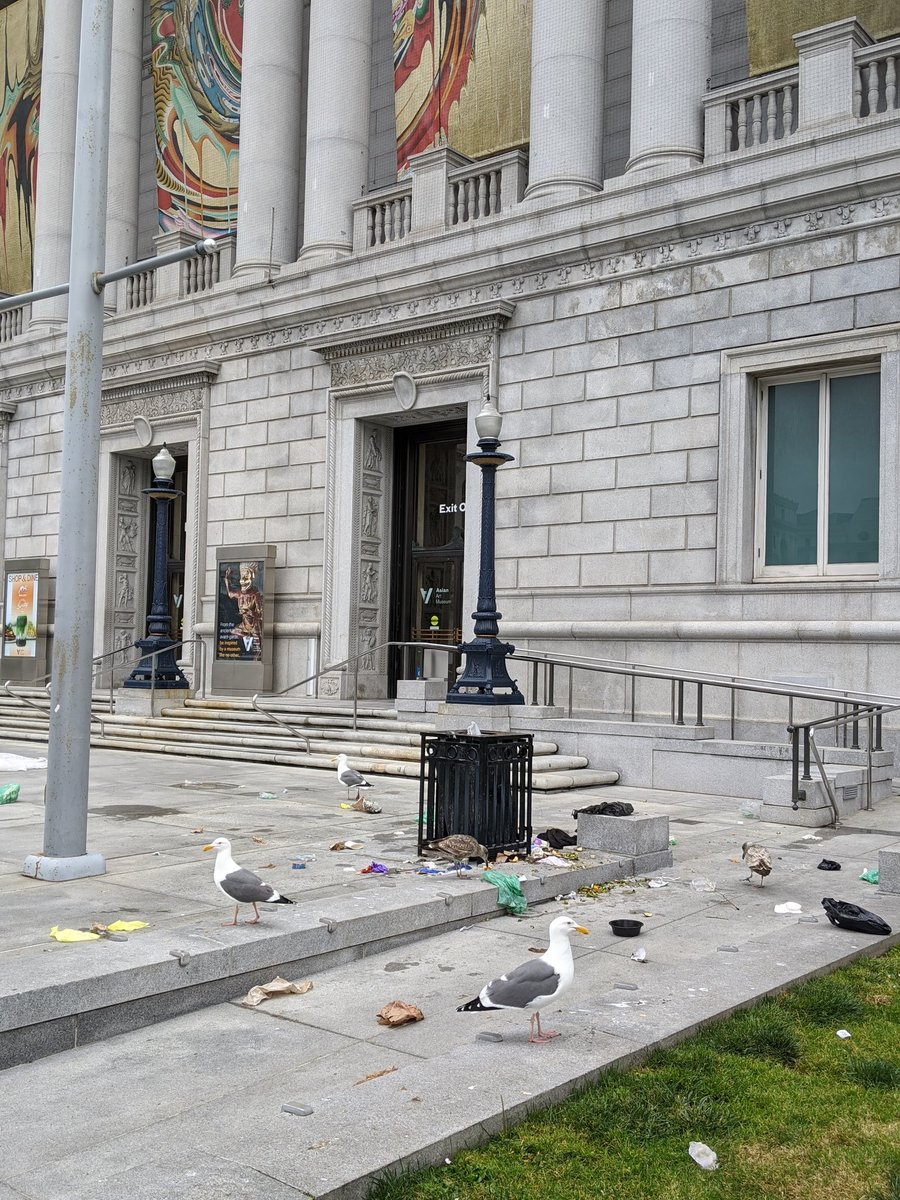 It's the kingdom of the seagulls outside the @asianartmuseum in San Francisco. Apparently they didn't get the stay home memo amid #COVID19 https://t.co/6ImUrSXNGE