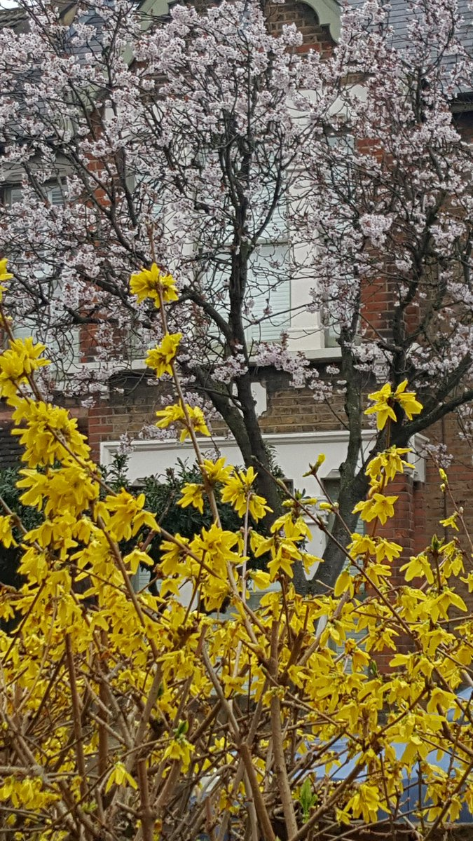 Thank you @TerryReintke London now sharing our blossom with #Brussels streets. #E17