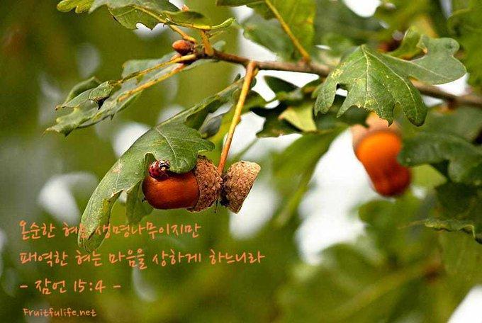 온순한 혀 생명나무