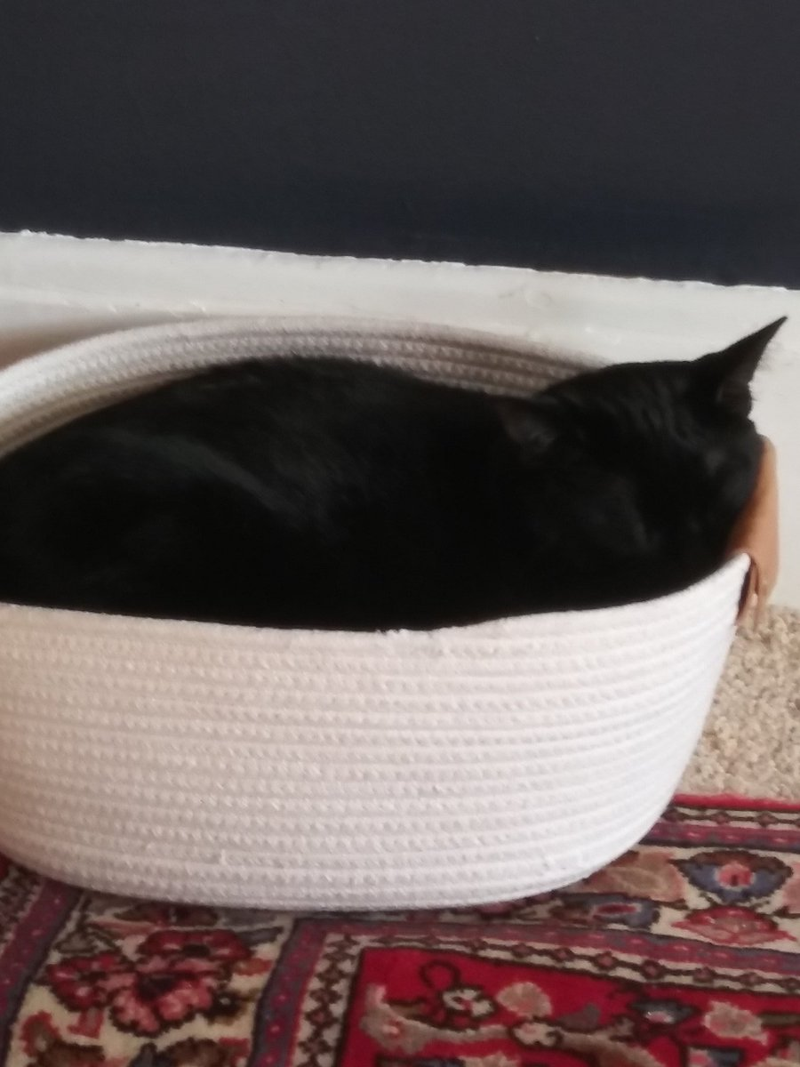 Picture of: Emily Kohlmeier On Twitter Won T Sleep In Either Of His Cat Beds But Will Sleep In A 12 Basket From Target