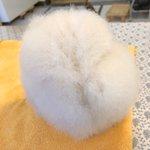 ただの綿毛かと思いきや・・・!真っ白なふわふわの正体は生後2週間ほどのあの鳥?!