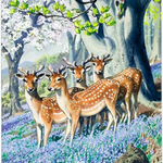 Image for the Tweet beginning: Today is #SpringEquinox. A day