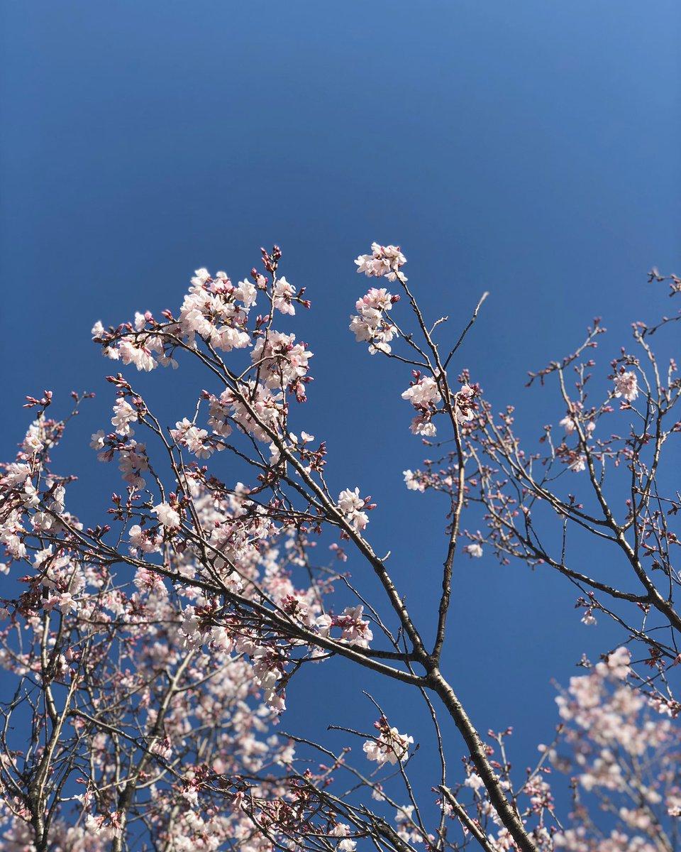 test ツイッターメディア - 春分の日🌸  皆さんの周りの桜は咲いていますか?😳 https://t.co/QZrzBUPJEO