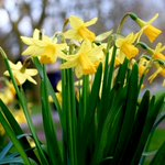 Image for the Tweet beginning: Today is the #SpringEquinox and