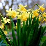 Image for the Tweet beginning: Happy #SpringEquinox! Today is the