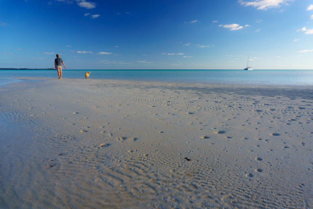 Viaja al Caribe con la excusa de sacar a pasear al perro: buff.ly/398d5ia