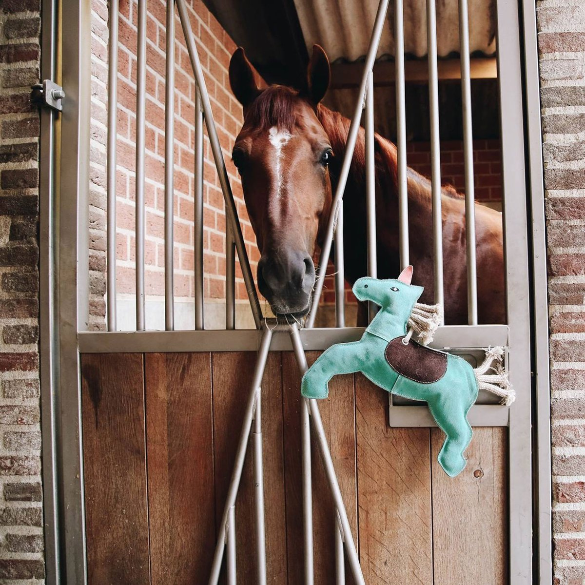 NEW BLOG: Our Tips for Keeping Your Horse Happy and Healthy  From training aids to stable toys, we've got everything you need  READ NOW: https://bit.ly/2J3NtZq  #Equestrian #Equiport #NewBlog #EquestrianBlog #TrainingAids #StableToys #StableAccessoriespic.twitter.com/AFVNguPhS5